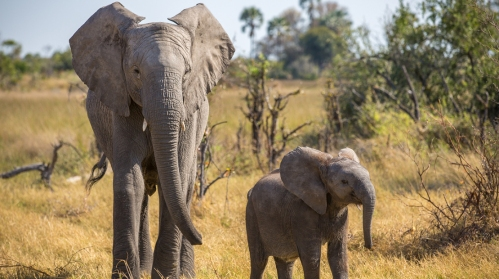 naledi_a_baby_elephant_tale